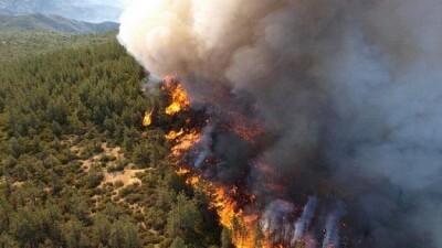 الحرائق تتلف عشرات الدونمات الزراعية في طرطوس