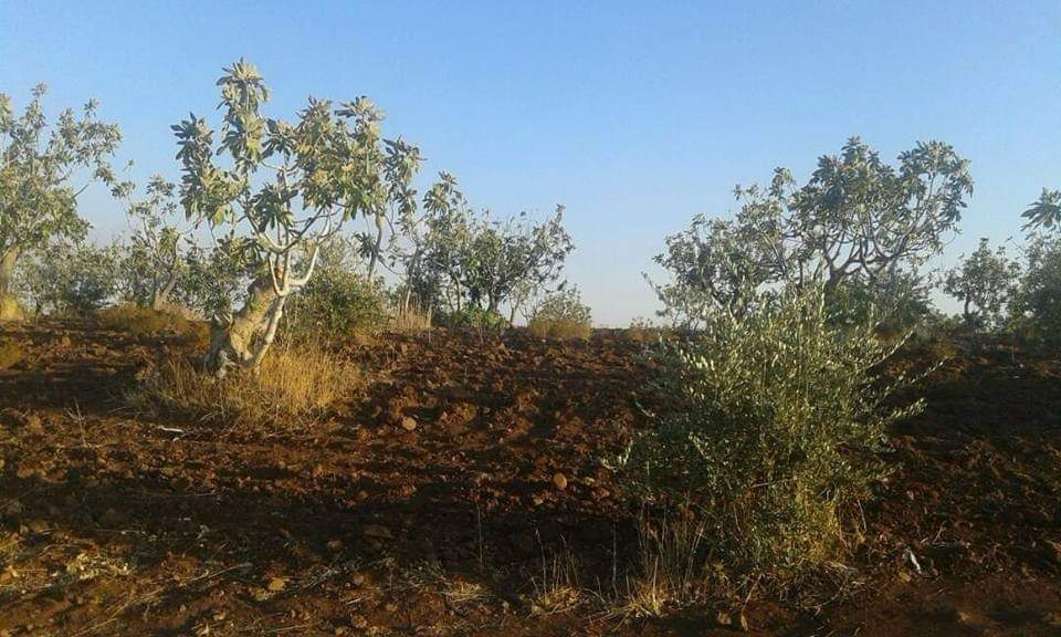 ضحايا في انفجار مخلفات الحرب شمال إدلب