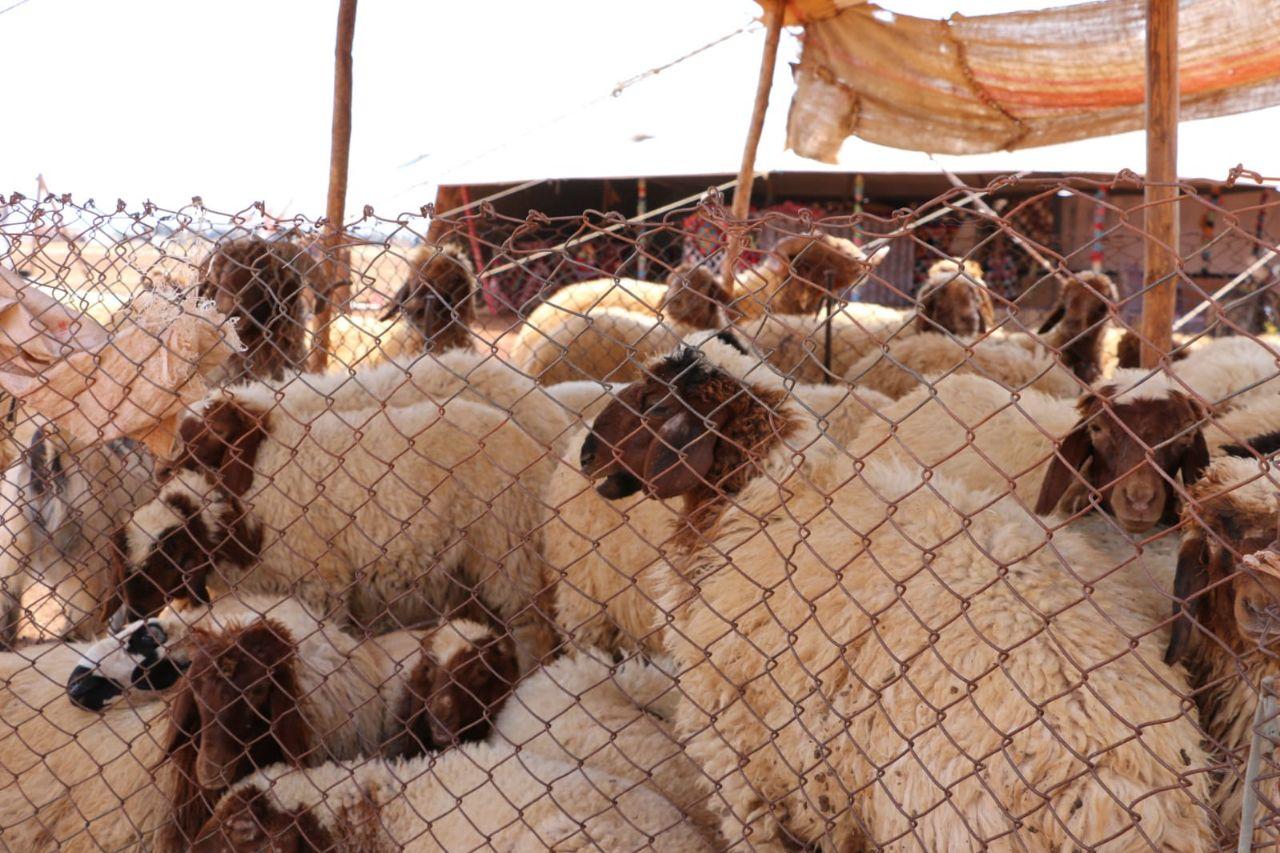 ما أسباب ضعف أسواق الماشية رغم قدوم عيد الأضحى في إدلب؟
