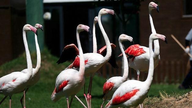 """حديقة تركية توفر رعاية خاصة لتسعة من طيور """"الفلامينغو"""""""