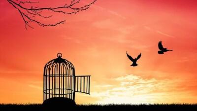 د جمال الشوفي: في التناقض الحادّ بين الحرية والاستبداد